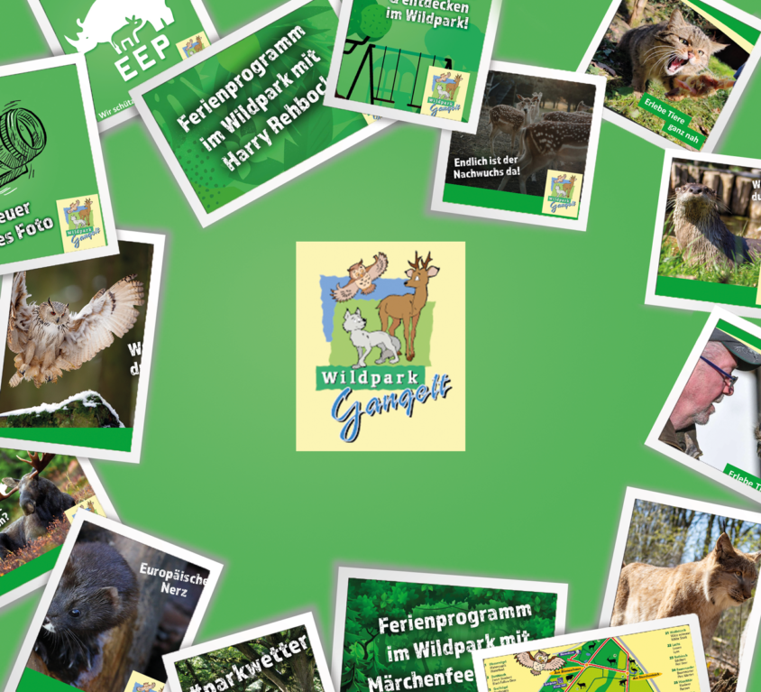 Social Media Wildpark Gangelt
